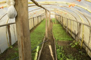 Actualmente los Trabajos comprenden además la contrucción de sitios para el emprendimiento local como invernaderos (en la foto) o chancheras.