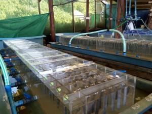 El nuevo laboratorio de corrosión marina y biofoulding se encuentra en un área reacondicionada del ECIM.
