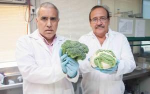 El proyecto se realizó en colaboración entre investigadores de Ingeniería UC y la Universidad